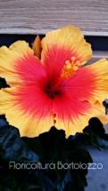 PicsArt_05-12-03.33.05