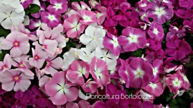 PicsArt_07-06-12.30.43