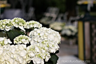 PicsArt_07-25-11.18.12
