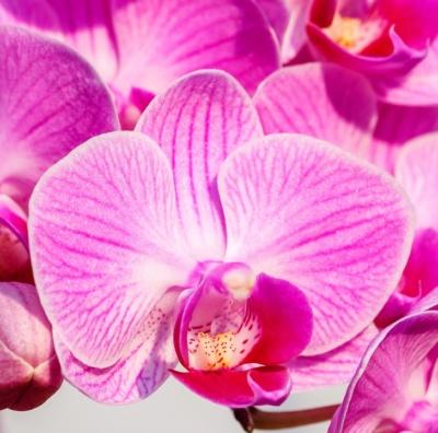 Come si coltivano le orchidee?!