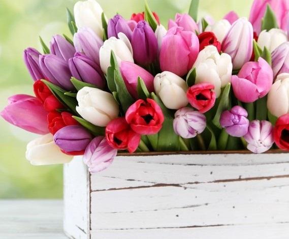 Come conservare i fiori recisi e farli durare piu' a lungo!